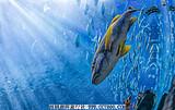 珠海长隆海洋王国、石景山公园、圆明新园两天五星游