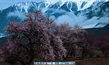 拉萨、林芝桃花村、雅鲁藏布大峡谷 超值4飞8天赏花游