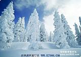 东北旅游-长春-长白山-沈阳五天双飞游(品质团)