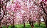 【赏樱花】从化望谷温泉小镇2天品质游_尊享私家独立温泉池