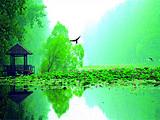 泰安出发到枣庄微山湖古镇、红河湿地一日游︱万亩红荷+运河风光