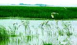东平湖影视城+畅游东平湖+泛小木舟湿地 休闲一日游