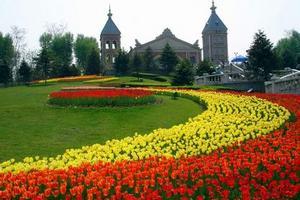 青岛世界园艺博览会优惠门票 青岛世博会开幕时间