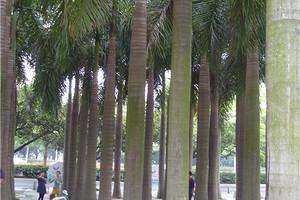 泰安国外蜜月旅游去泰国曼谷 芭提雅 沙美岛5晚7天蜜月之游