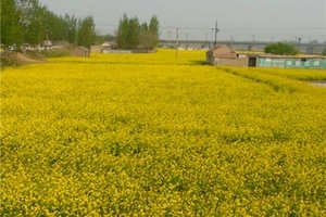 越南芽庄旅游  泰安到芽庄休闲双飞5晚6天 发现芽庄