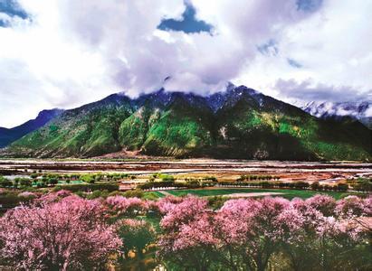 3月西藏最美純色林芝桃花節