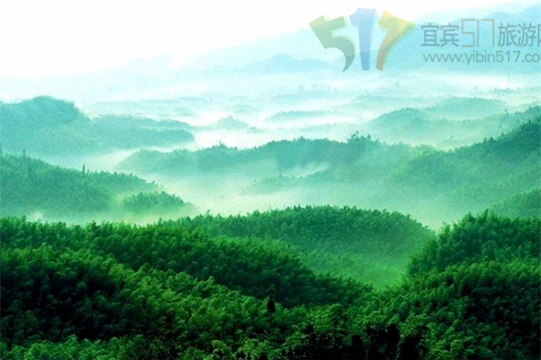 宜宾早上8点半,指定地点集合,乘车前往中国最美的十大森林公园之一—