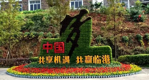 宜賓臨港龍頭山菊花展,今年免費觀看!