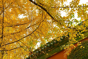 春节计划!宜宾出发【阆中古城、风水博览城两日游】