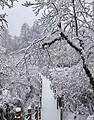 26/30/1/2號宜賓出發【瓦屋山、眉山水街純玩2日游】