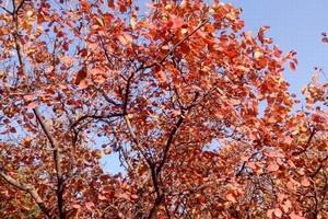石家庄到沕沕水空中画廊赏红叶一日游