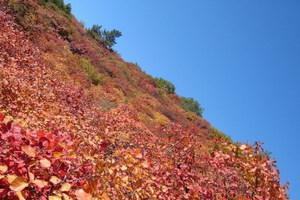 石家庄到仙台山看红叶一日游