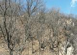 石家庄旅行社推荐黑山大峡谷一日游