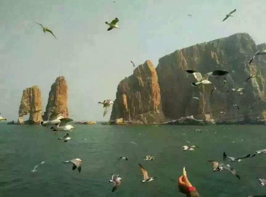 青岛到长岛旅游 万鸟仙山,海岛探秘,仙境蓬莱二日游