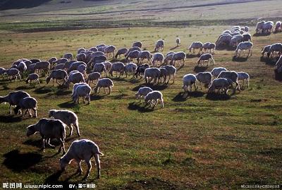 夏季旅游好去处:青岛出发去内蒙古大草原旅游攻略