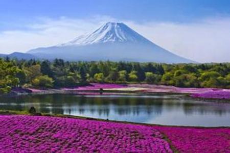 日本有什么好玩的地方 青岛到日本京都奈良镰仓双飞7日游
