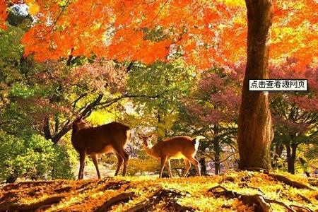 青岛去日本玩啥 日本本州双乐园 镰仓7日游