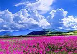 什么季节去香格里拉比较好  青岛到大理丽江香格里拉双飞单卧六