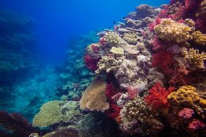 凯恩斯大堡礁  青岛到澳大利亚凯恩斯双飞12日游
