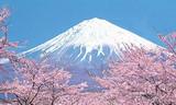 日本签证需要什么材料  青岛到日本京都奈良双飞六日游