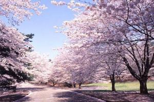 2020春节 韩国首尔亲子双飞 5 日 青岛起止