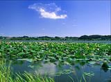 青岛最有名的山是什么山 青岛崂山 太清宫 八水河一日游