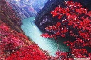 重庆到巫山神女峰赏红叶_长寿柚子园/古镇二日游