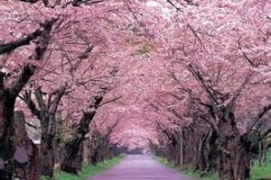 重庆直飞日本夜东京、双古都、盛夏本州(环线)6日游