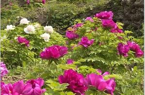 浪漫垫江乐天花谷、草莓园、长寿菩提古镇一