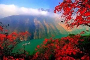 渝之旅三峡红叶季重庆-宜昌长江三峡国内游船单程2天往返3日游