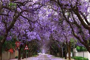 重庆出发五星卡塔尔航空南非花园大道10天