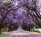 千赢国际娱乐首页出发五星卡塔尔航空南非花园大道10天