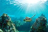 巴厘岛6日5晚风情游~海龟岛_阳光海滩_海神庙_特色海鲜烧烤