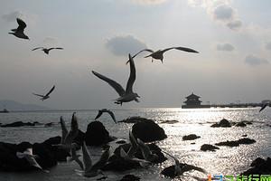 我们浪起来——青岛 崂山 半自由行轻奢双高5日游