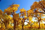 【巴丹吉林沙漠摄影团】额济纳胡杨林、巴丹吉林沙漠、张掖六日游