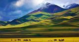 银川出发到新疆乌鲁木齐、喀纳斯、巴音布鲁克13日游