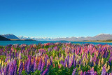 银川到澳大利亚新西兰墨尔本11日游