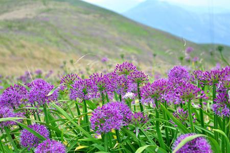 银川去贵州黄果树、西江千户苗寨、贵州百里杜鹃赏花6日游