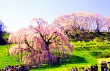暑假银川到日本东京、大阪、富士山、镰仓六日品质温泉游