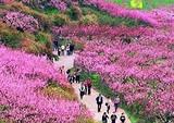 银川清明节到六盘山赏花二日游