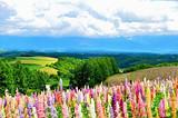 银川到日本北海道休闲浪漫七日游