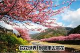清明节银川到袁家村/青龙寺/蓝田杏花谷赏花三日游