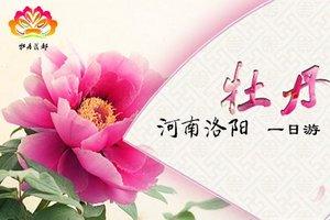 【洛阳牡丹旅游】郑州到洛阳牡丹一日游