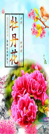 洛阳牡丹花会节旅游