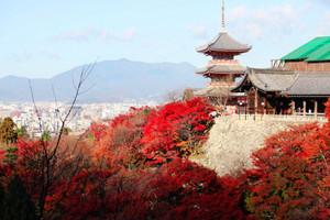厦门国旅【首尔半自助】韩国六日游 国旅电话