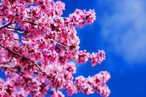 厦门到日本旅游【4月新经典之旅】大阪箱根富士山东京6日游