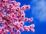 厦门到日本旅游【3-4月新经典之旅】大阪箱根富士山东京6日游