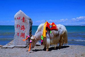 甘肃旅游精选【青海湖+可可西里+甘肃大环线深度游9天8晚】