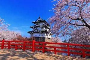 厦门到日本旅游【2-3月经典之旅】日本东京伊豆箱根早樱6日游