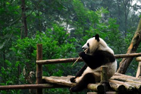 四川无自费推荐【7-8月熊猫传奇】成都峨眉山乐山+都江堰5日